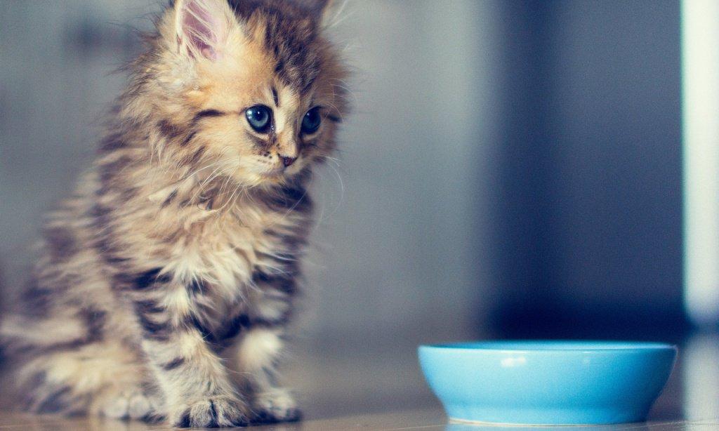 как вывести запах кошачьей мочи с линолеума