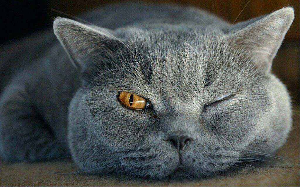 убрать запах кошачей мочи с линолеума